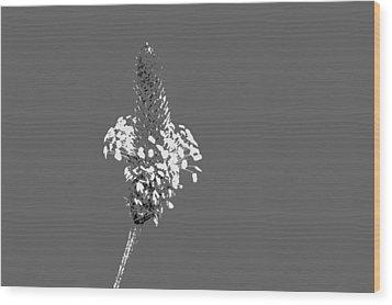Light Grey Plantain Wood Print