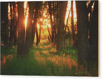 Wood Print featuring the photograph Light Of The Forest II by John De Bord