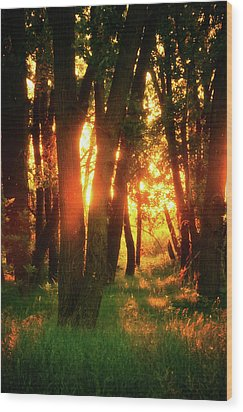 Wood Print featuring the photograph Light Of The Forest by John De Bord