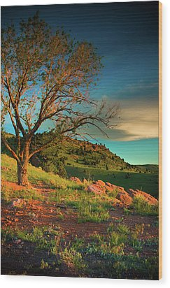 Wood Print featuring the photograph Light Of The Hillside by John De Bord