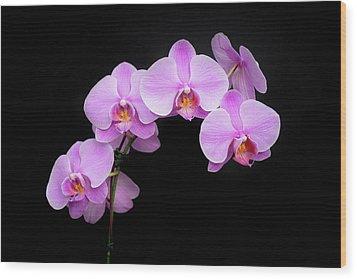Light On The Purple Please Wood Print