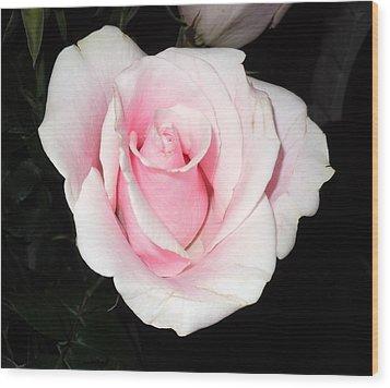 Light Pink Rose Wood Print by Karen J Shine