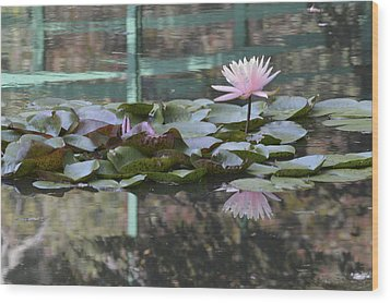 Light Pink Water Lily Wood Print by Linda Geiger