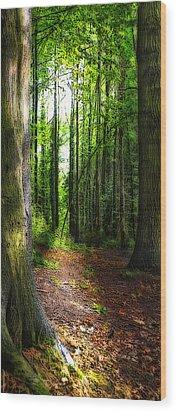 Light Through The Trees Wood Print by Meirion Matthias