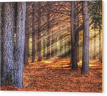 Light Thru The Trees Wood Print by Sumoflam Photography