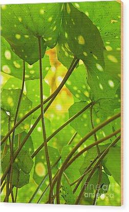 Ligularia Tussilaginea Wood Print by Carlos Caetano