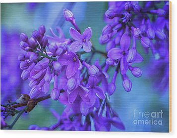 Lilac Blues Wood Print by Elizabeth Dow