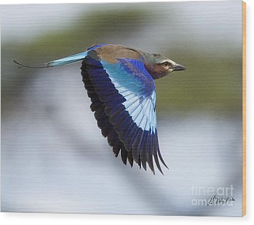 Lilac-breasted Roller-signed Wood Print