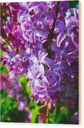 Lilac In The Sun Wood Print