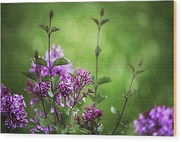 Lilac Memories Wood Print by Karen Casey-Smith
