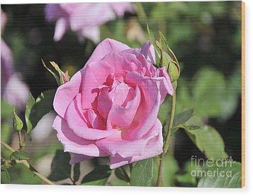 Lilac Rose 2 Wood Print by Rudolf Strutz