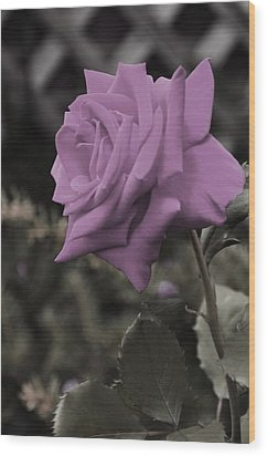 Lilac Rose Wood Print by Vijay Sharon Govender