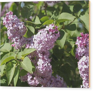 Wood Print featuring the photograph Lilacs 5544 by Antonio Romero