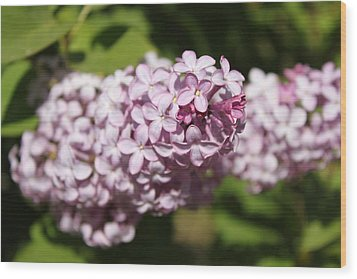 Wood Print featuring the photograph Lilacs 5549 by Antonio Romero