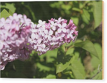 Wood Print featuring the photograph Lilacs 5550 by Antonio Romero