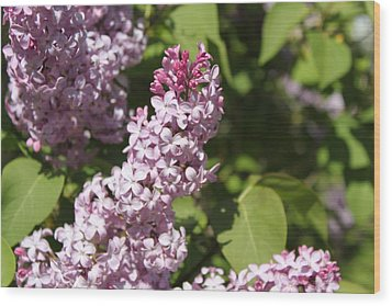 Wood Print featuring the photograph Lilacs 5552 by Antonio Romero