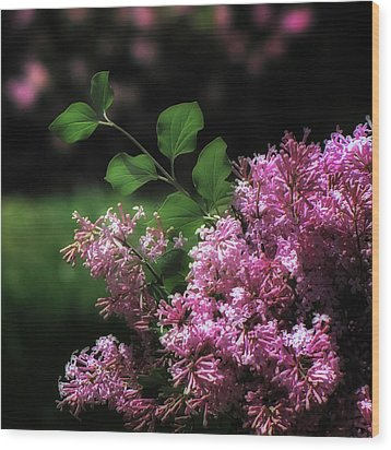Lilacs In Bloom Wood Print