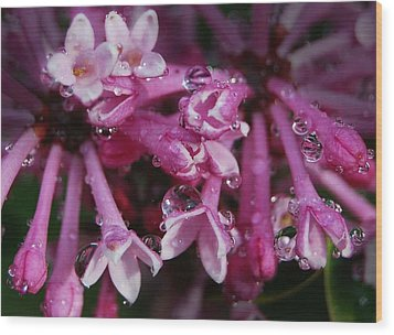 Wood Print featuring the photograph Lilacs In Rain by Marilynne Bull