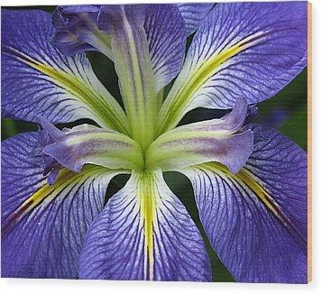 Lilied Wood Print by Vari Buendia
