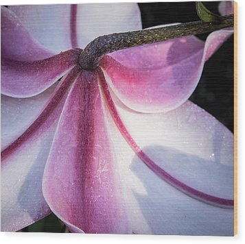 Wood Print featuring the photograph Lilies Backside by Jean Noren
