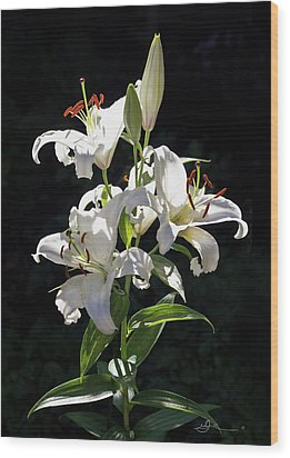 Lilies In The Sun Wood Print