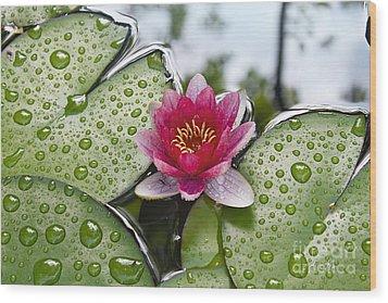Lilies No. 5 Wood Print