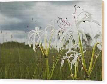 Lilies Thunder Wood Print
