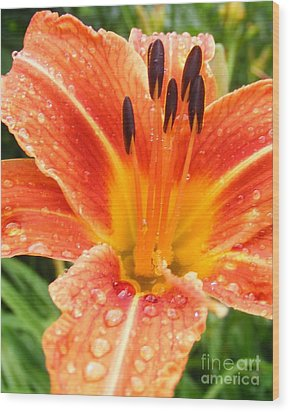 Wood Print featuring the photograph Lily After The Rain by Lila Fisher-Wenzel