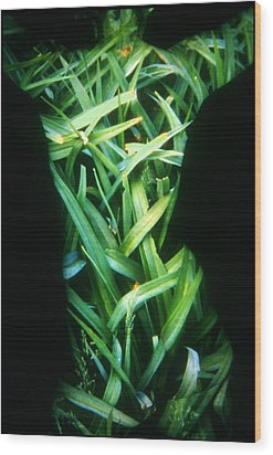 Lily Leaves Wood Print by Arla Patch