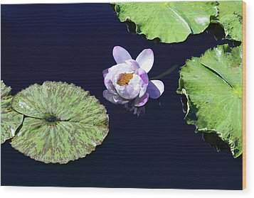 Wood Print featuring the photograph Lily Love II by Suzanne Gaff