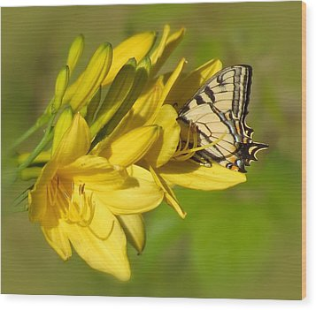Lily Lover Wood Print by MTBobbins Photography