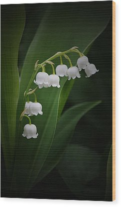Lily Of The Valley 2 Wood Print