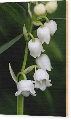 Lily Of The Valley Wood Print by Bobbi Smith
