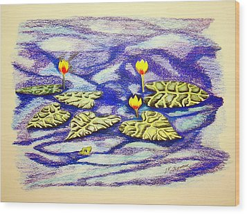 Lily Pad Pond Wood Print by J R Seymour