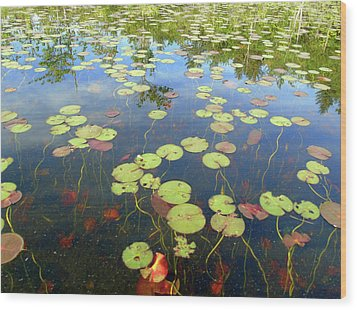 Lily Pads And Reflections Wood Print