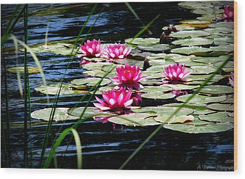 Lily Pads And Wildflowers Wood Print