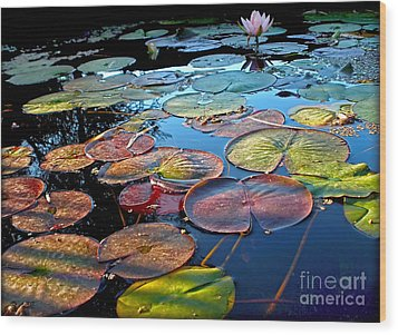 Lily Pads At Sunset Wood Print by Kaye Menner