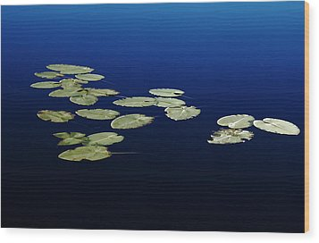 Lily Pads Floating On River Wood Print by Debbie Oppermann