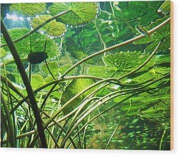 Lily Pads I Wood Print by Anna Villarreal Garbis