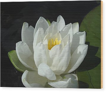 Wood Print featuring the photograph Lily Pond by Christie Minalga