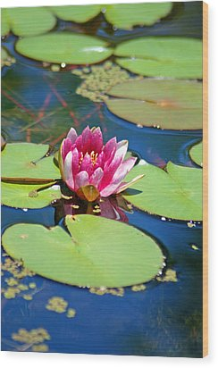 Lily Pond Wood Print by Donna Bentley