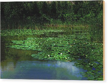 Lily Pond Wood Print by Elaine Manley