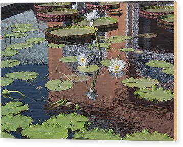 Lily Pond Reflections Wood Print by Suzanne Gaff