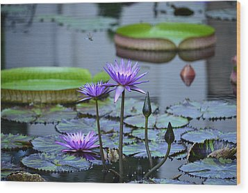 Lily Pond Wonders Wood Print by Maria Urso