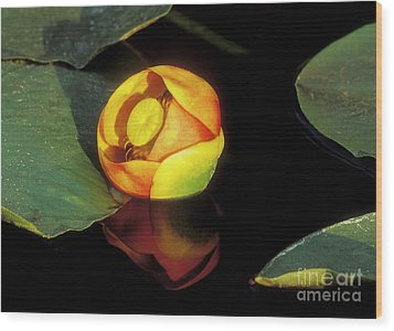 Wood Print featuring the photograph Lily Reflection by Sandra Bronstein