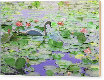 Wood Print featuring the photograph Lily Swan by Carol Kinkead