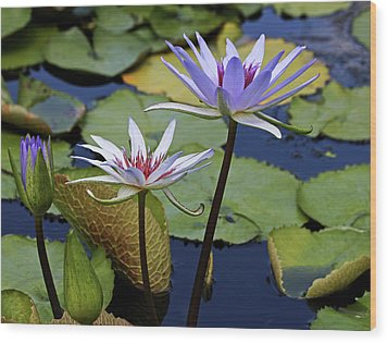 Wood Print featuring the photograph Lily Trio by Judy Vincent