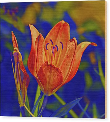 Wood Print featuring the photograph Lily With Sabattier by Bill Barber