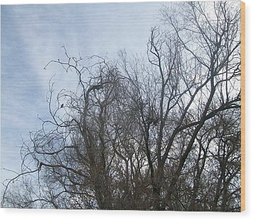 Wood Print featuring the photograph Limbs In Air by Jewel Hengen