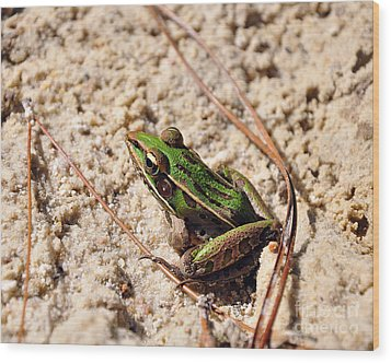 Wood Print featuring the photograph Lime-like by Al Powell Photography USA